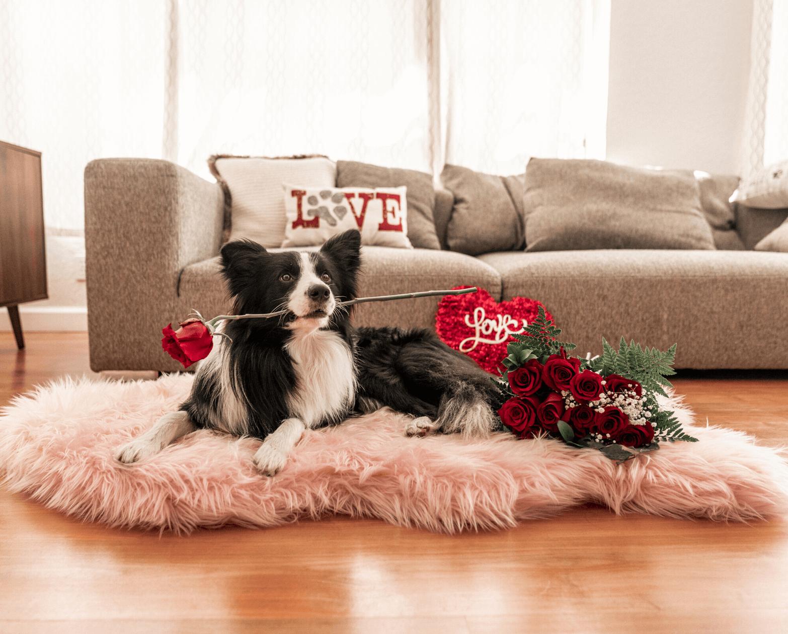 PupRug™ Faux Fur Orthopedic Dog Bed – Curve Blush Pink Pet Beds, Mats & Houses Pet Designer Beds