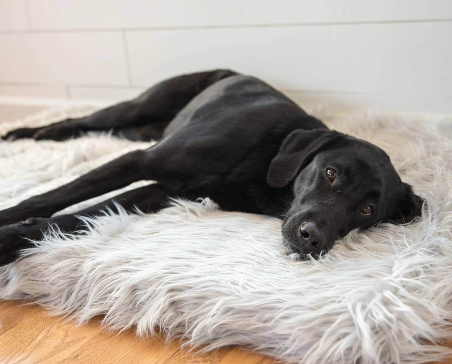 PupRug™ Faux Fur Orthopedic Dog Bed – Rectangle Grey Pet Beds, Mats & Houses Pet Designer Beds