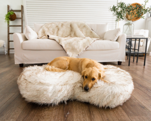 Designer Pet Beds