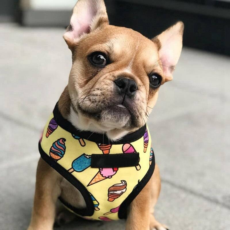 Breathable Small Dog Pet Harness Puppy Cat Vest Harness Collar For Chihuahua Pug Bulldog Cat arnes perro New Cats & Dogs Cats & Dogs Products Pet Collars, Harnesses & Leashes